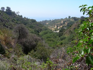 View from Topanga State Park