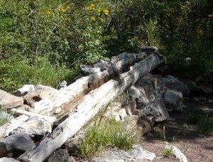 Log at Capulin Springs