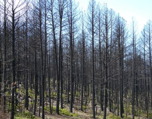 Big Spring Fire damage