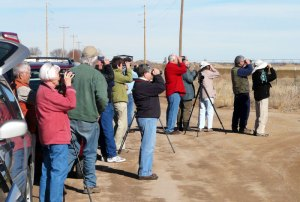 Gazing at Ferruginous Hawk