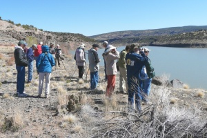 Thursday Birders at Cochiti Lake