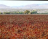 Luis Lopez chile fields