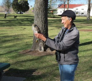 releasing radio-tagged Cooper's Hawk
