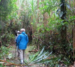 Peru-Amazonia-forest-trail