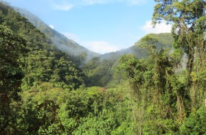 Montane cloud forest along Manu Road