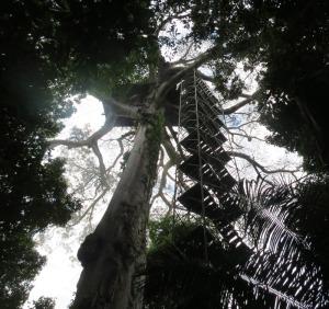 Peru-MWC-tower-stairs