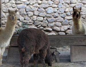 Peru-Ollantayambo-hotel-alp