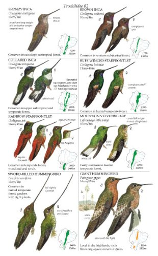 First Field Guide to Birds of Iraq Shows No Extinctions