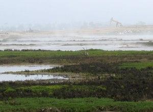 CA-Bolsa-Chica-wetlands