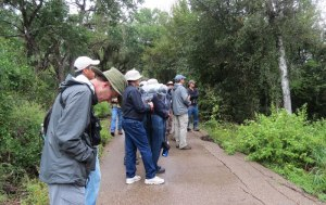 birders listening - not looking through binoculars