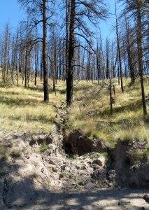 Valles-Caldera-erosion-9-19