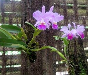 CU-Soroa-orchid-garden1