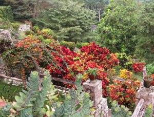 CU-Soroa-orchid-garden3
