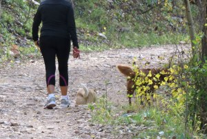 Aspen-vista-hiker-dogs-9-29-