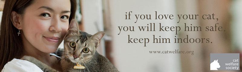 Cats-Indoors