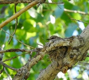 Michele-VEFL-nesting