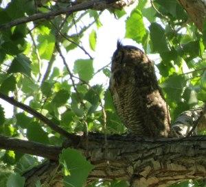 Rattlesnake-Springs-GHOW-5-