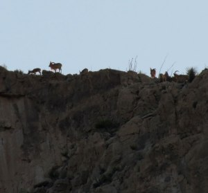 Slaughter-Canyon-Desert-Big