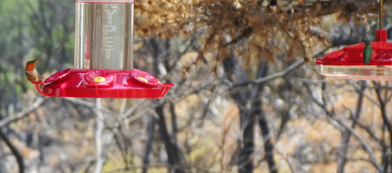 Bonnie-hummer-feeders-7-21-