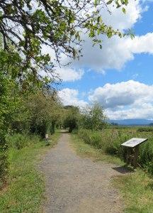 WA-Mt-St-Helens-VC-meadow-t