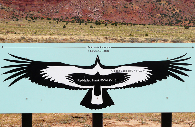 Condors of the Columbia | It's a bird thing...