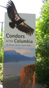 OR-Portl-Zoo-Condors-of-Col