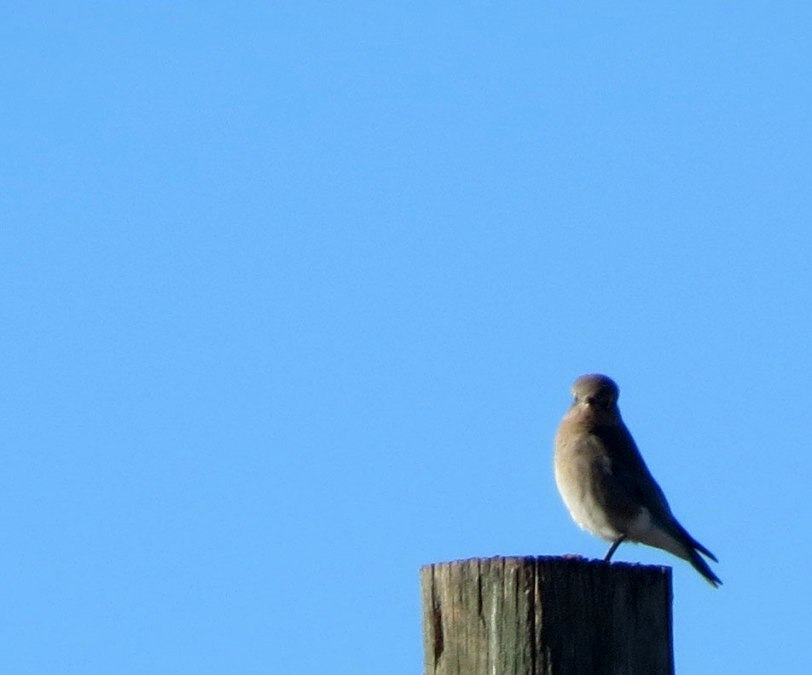 bluebird-count-1st-mobl-1-2
