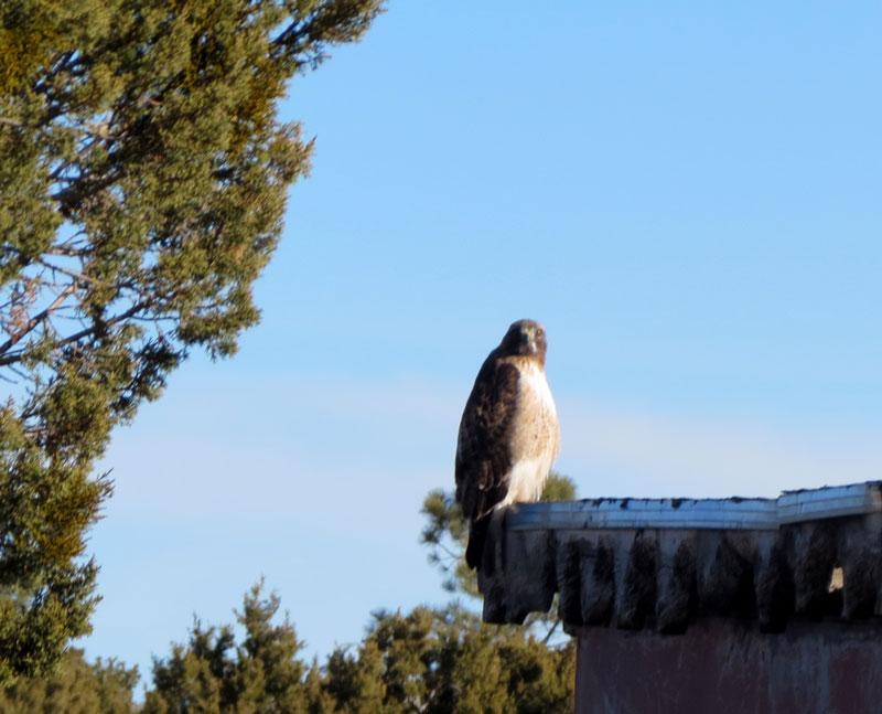 bluebird-count-rtha-1-28-17