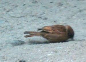 CH-Bird--Xian-ETSP