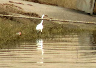 CH-Bird-Yangtze-LIEG