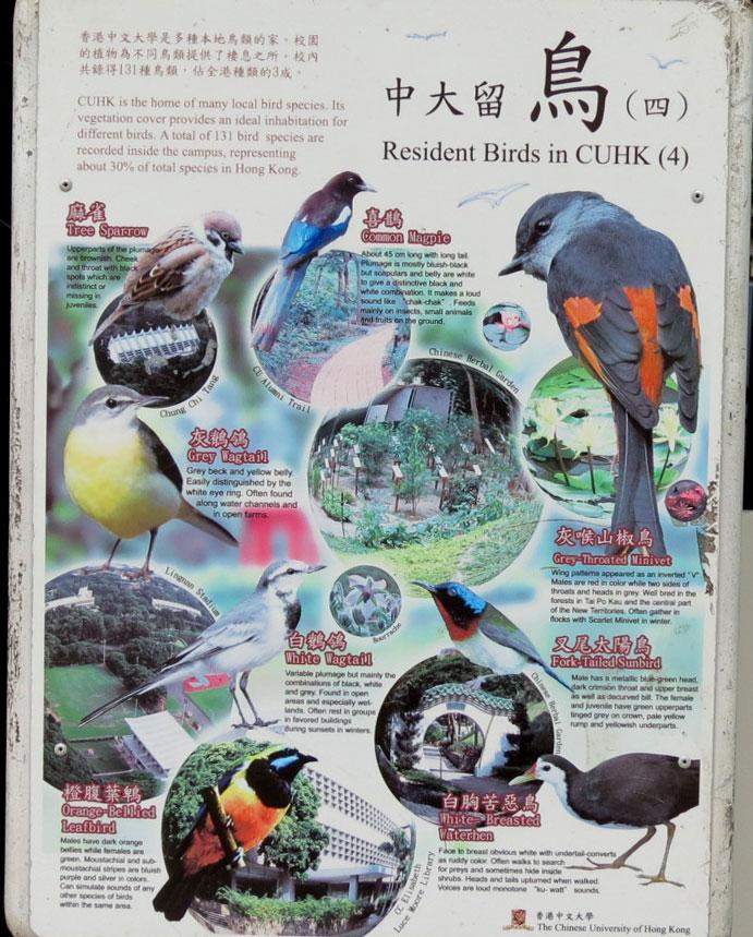 HK-Birds-of-CUHK