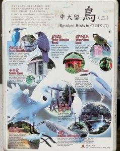 HK-Birds-of-CUHK2
