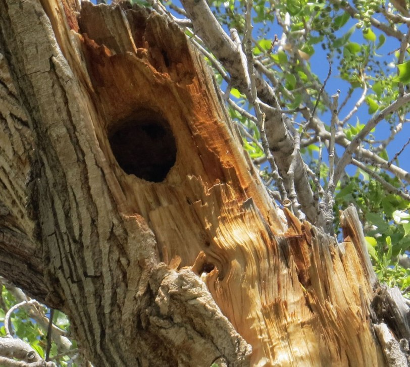 Tingley-NOFL-nest-hole2-4-14-18