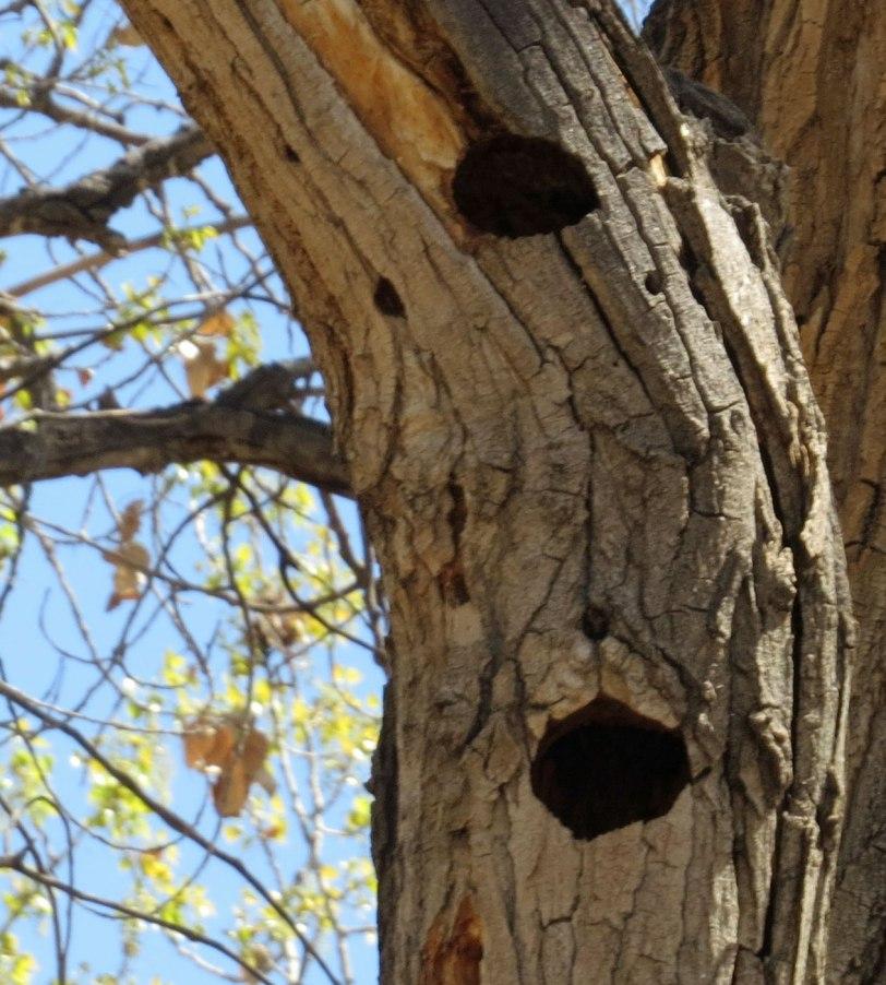 Tingley-NOFL-nest-holes-4-14-18