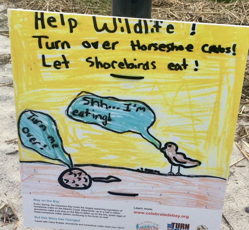 Cape-May-horseshoe-crab-sign