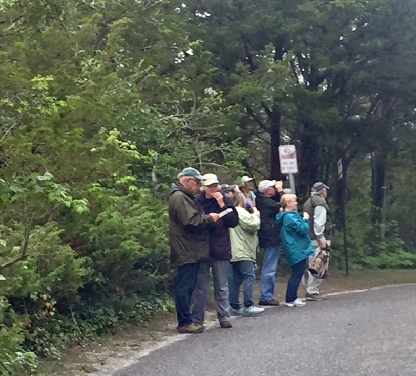 Cape-May-warbler-watching