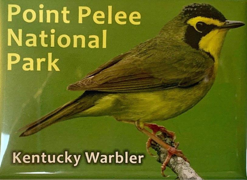 Keentucky-Warbler-magnet