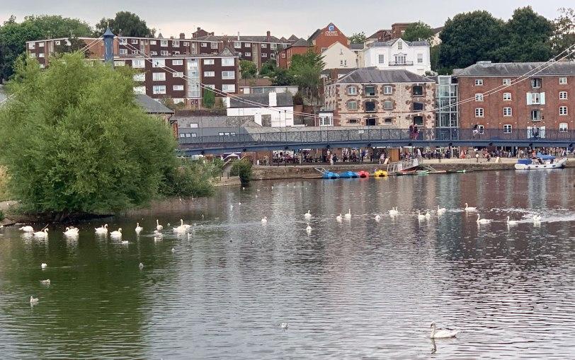 UK-Exeter-swans-8-4-19