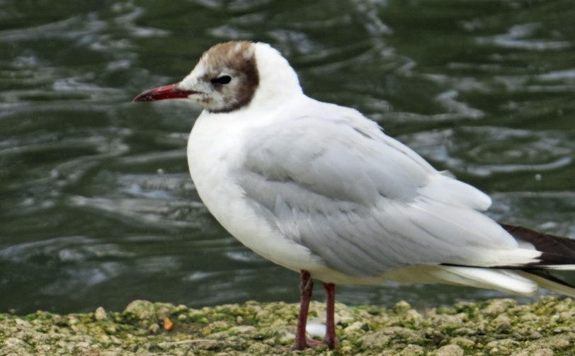 UK-Slimbridge-BHGU-7-31-19