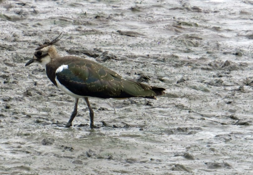UK-Slimbridge-NOLA-7-31-19