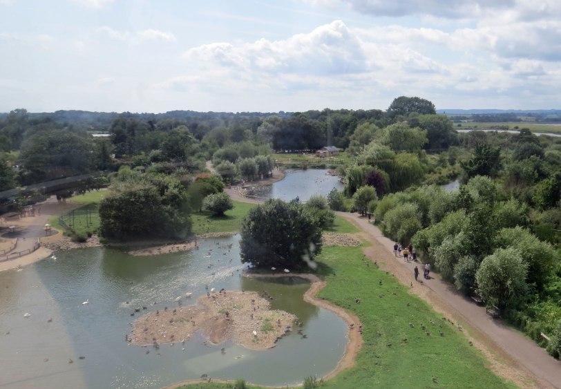 UK-Slimbridge-view-7-31-19