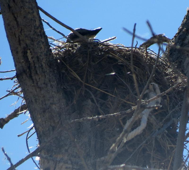 Villanueva-SP-WEKI-nest-6-1